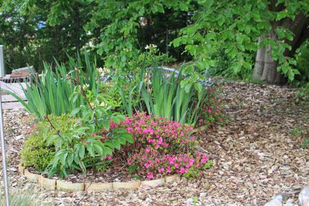 blomster i haven